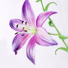 A lily for Lena