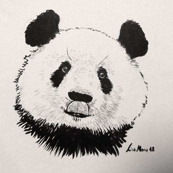 Inktober portrait of panda, by lisa mona